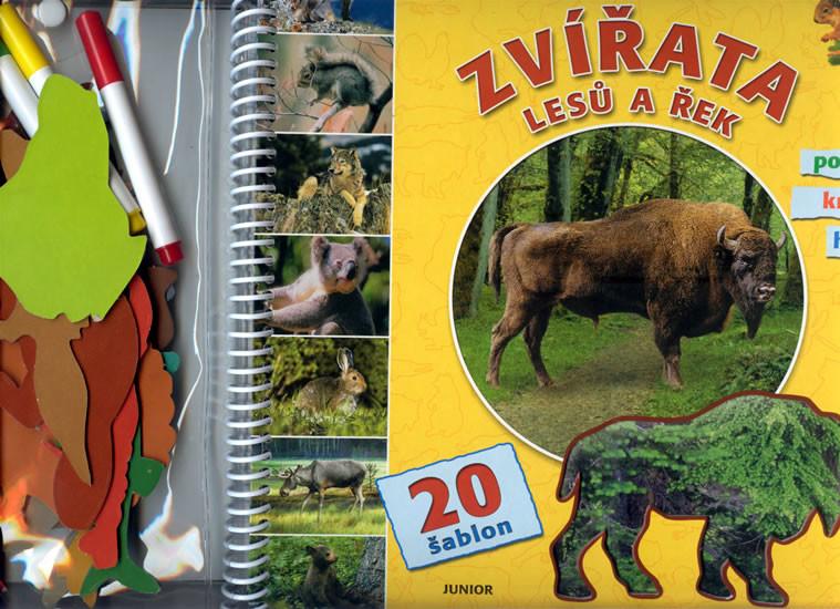 Zvirata Lesu A Rek Sablony Ke Kresleni Knihy A Dvd